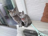 猫ちゃんには、猫ちゃんと暮らせる事しかメリットはありませんが、 猫ちゃんと暮らす事のデメリットは何ですか?  (ΦωΦ)