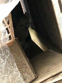 この写真の猫は生後何ヶ月頃かわかる人いませんか?