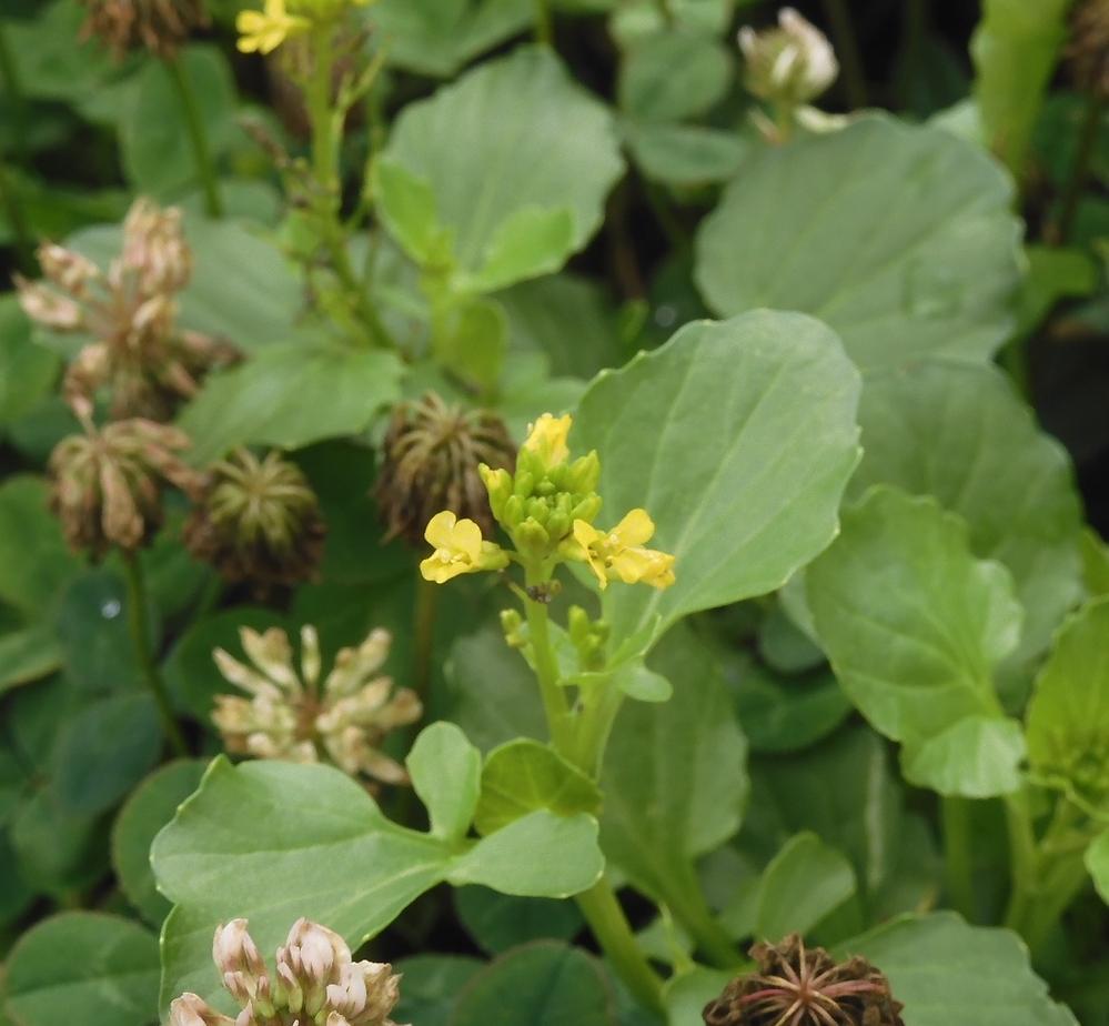 この黄色い花の名前を教えてください。よろしくお願いいたします。