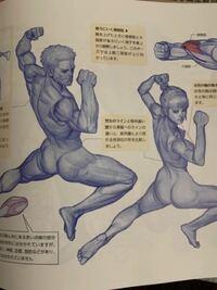 イラストの描き方について教えてください。 現在、参考書を読みながら参考書のイラストを模写しています。  下の写真のような絵を描いてます。  しかし、様々なポーズの筋肉の動きなどが分からず、まだまだ上手く描けません。   こういう絵を描くためには骨格や筋肉について理解する必要があるのでしょうか?  漫画を描いてみたいので、自分なりに画力を身に付けたいです。   買った本の著者がたまたまリアルな...