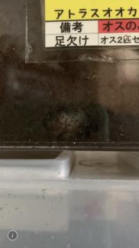 ヘラクレスオオカブトの幼虫を飼っているんですが、生まれてから一ヶ月で四センチ程度にまで成長しました。 この種類の成長速度ってそれくらい速いんでしょうか?