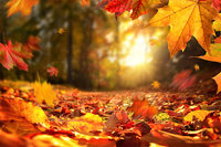 タイトルに「秋」か「オータム」が入った小説やエッセイを教えて下さい。 国内外の作品問いません。翻訳作品の場合は、日本語のタイトルに「秋」か 「オータム」が入ったものでお願いします。