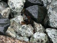 家の屋根に蜂の巣が作られてたのですが、この蜂ってなんていう蜂ですか?