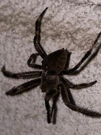 このクモは益虫ですか? 種類も教えていただけるとありがたいです。