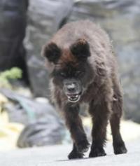 これは熊ですか?