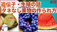 種なし果物は人類がいなくなったら絶滅ですか? 先祖返りして種を作り出す?  . 現在日本のスーパーで販売されているバナナは、まず100%種がないですよね。 バナナは新芽を人間が株分けすることによって、増えています。  他にも種なしブドウや種なしスイカも販売されていたりします。 人間の手によって種を作らないように品種改良されています、人間にとって食べやすいように。  ただ、もしも人類が明日にも...