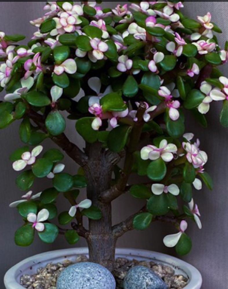 この植物の名前をご存知の方がいらっしゃいましたら教えてください。 どうぞよろしくお願いします。