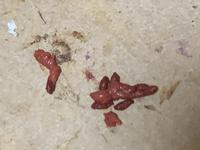 ハムスターなんですけど、 掃除のため別の箱に移動させた際、 赤いうんちをたくさんしていたのですが、 これは大丈夫なものですか? なにか原因などがあるのでしょうか。 画像貼りますが、汚くてすみません。