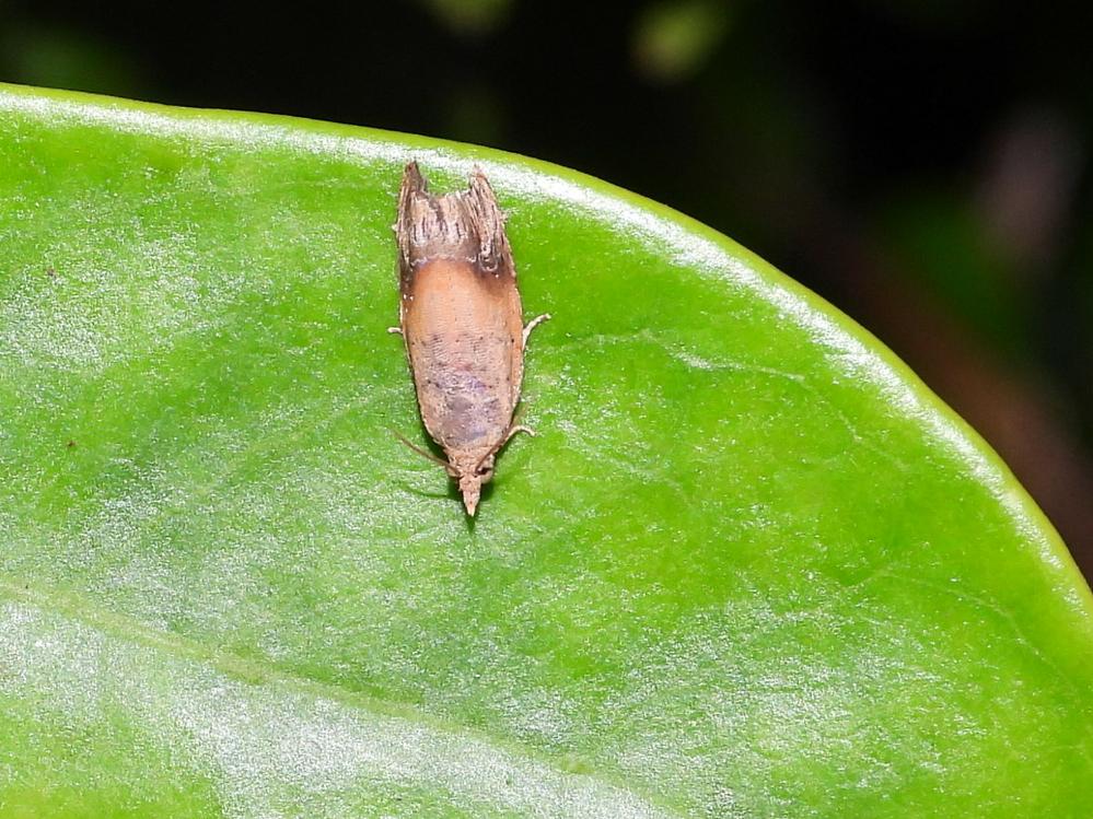 この蛾の名前教えて下さい。