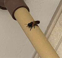 すみません、蜂が巣を作り出したようです。 種類は分かりますか?