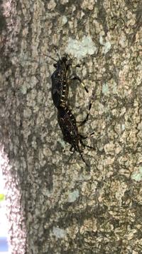 近所の公園で見つけました! この虫わかりめすか?