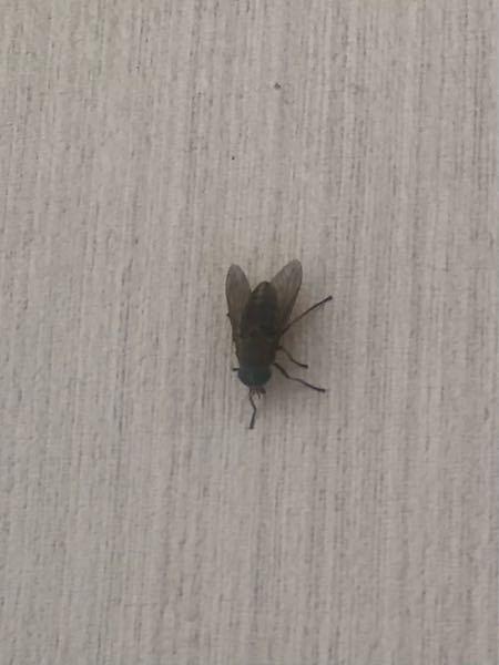 これなんの虫ですか?