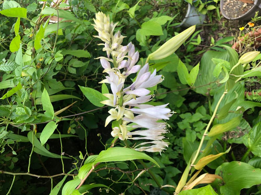 山梨県で見つけた花です。 こちらの花の名前をご存知の方、是非教えてください!