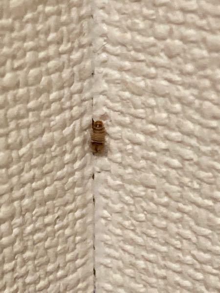 閲覧注意です。 今家の中で画像のような虫の卵のようなものを発見してしまいました... ゴキブリの卵でしょうか 詳しい方教えてください...