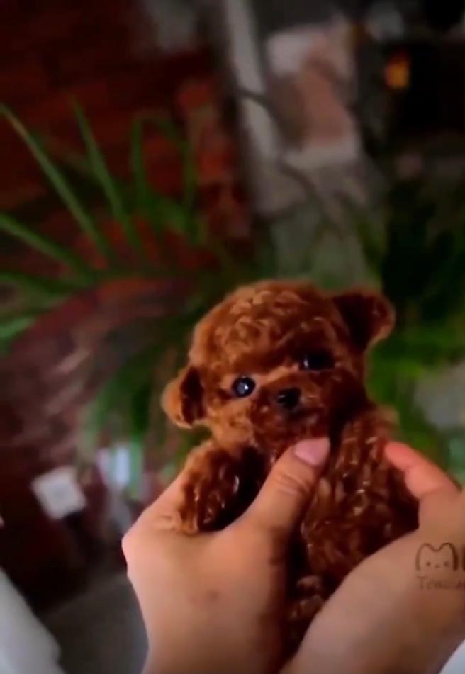 この子犬の犬種を教えてくださいm(_ _)m