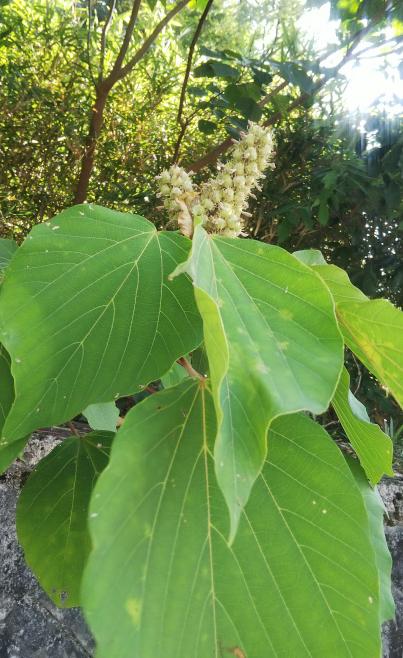 これは何の植物ですか? ご存知の方教えて下さい。