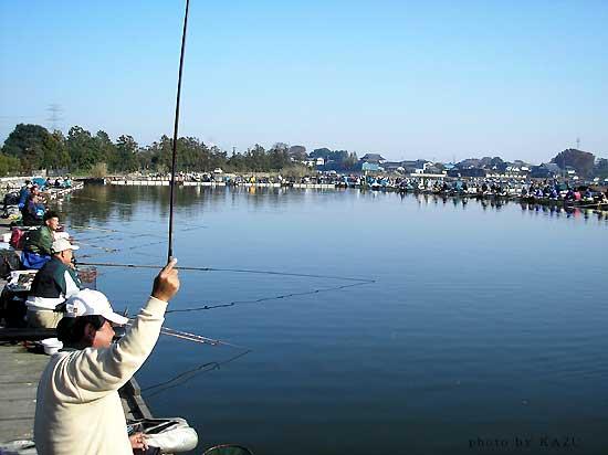 ネットでたまたま見つけた茨城県のヘラブナのフィッシングエリアですが、素人目にはかなり規模の広大なエリアのように見えます。茨城県にはこのようなエリアはたくさんあるんですか? もしかして、県民性では茨城県て日本一ヘラブナ釣りが盛んな県?