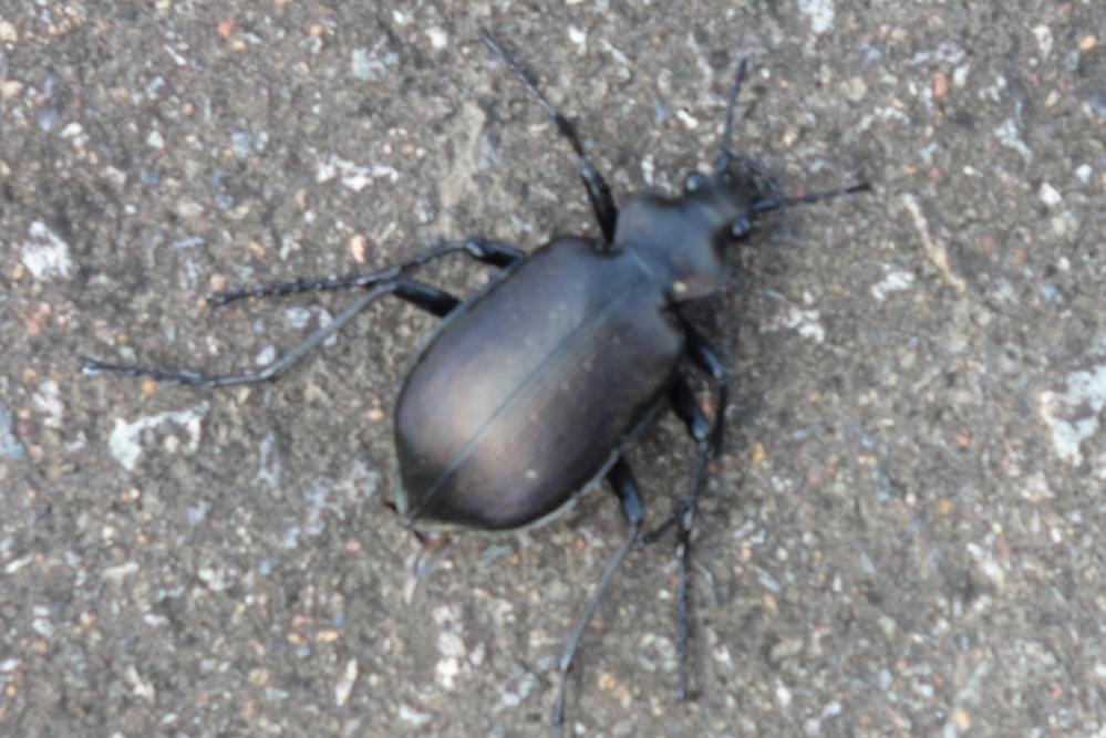 この昆虫の種類を教えて下さい 詳しい方よろしくお願いします。