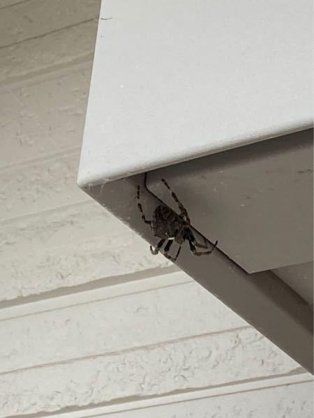またまた虫についての質問です。 このクモの名前を教えてください。 2~3センチくらいです。 また危険かどうかも教えてください。 お箸でつまんで移動させようと思っています。 虫博士さんからのご回答お待ちしてます!