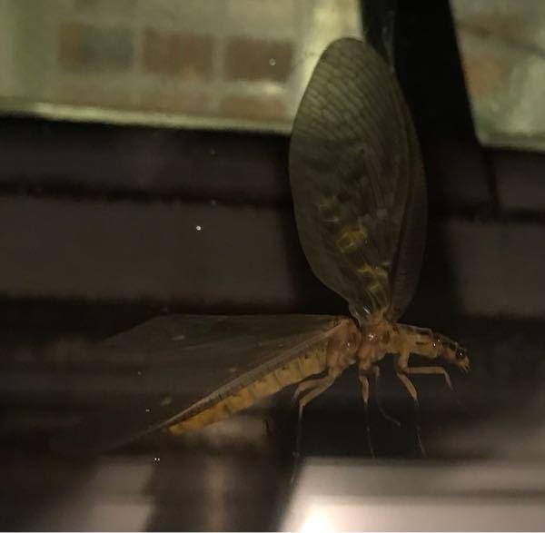 でかい虫見つけました!何虫ですか??