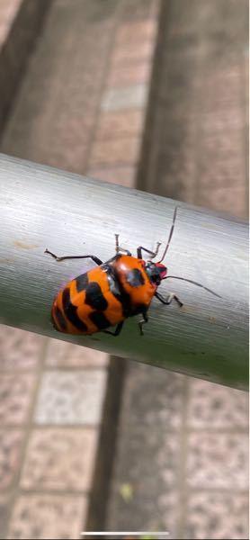 なんの虫か知りたいです。 特徴と生息域とかも教えてほしいです。