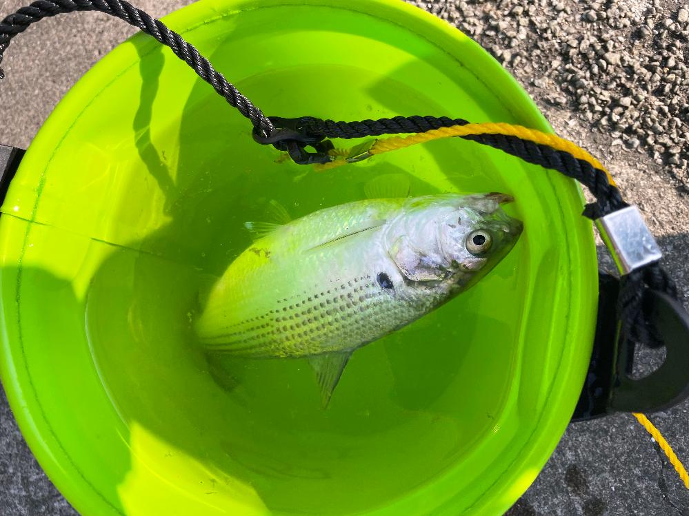 この魚はなんですか? 食べられますか?