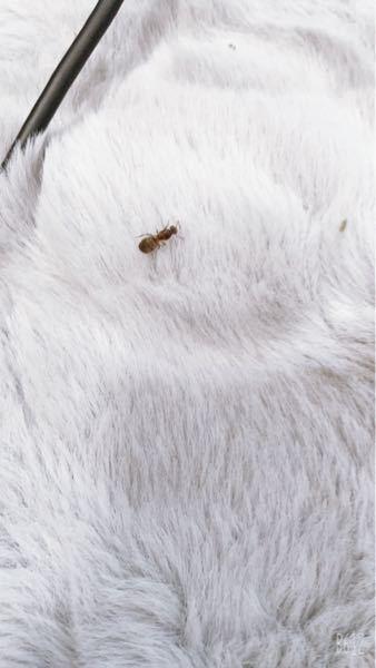 この虫は何ですか?なんかかゆいなーと思ったらこいつが居ました。今も痒いです。