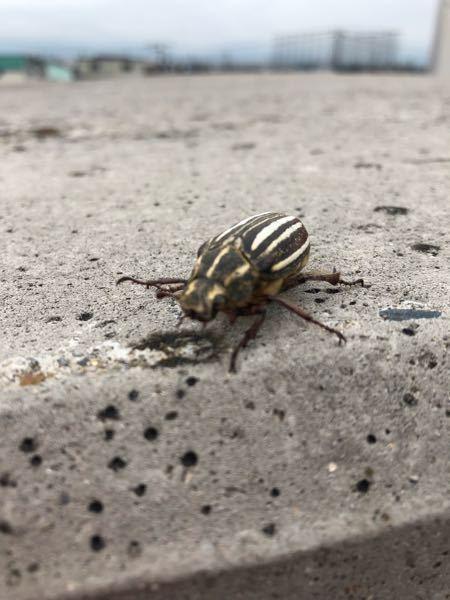 この虫はなんという虫ですか?? 北海道道南で見かけました。