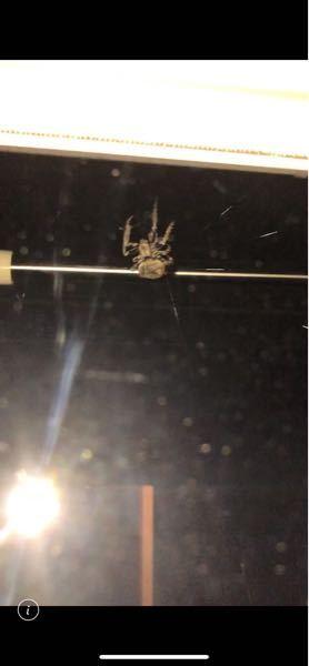 家のベランダに見たことの無い蜘蛛がいたのですがこの蜘蛛の名前がわかる方いますか??