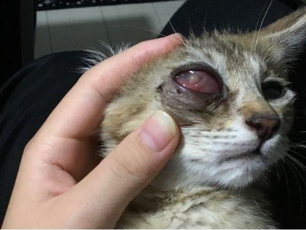 今いってる動物病院で目薬を処方された時、違う病気にかかってるといわれました。 その病院は経験がまた浅いっぽいんです、 目薬を朝と夜やり続けているとこのようにならました 違う病院に行った方がいいですか? 私は行きたいのですが父がうるさいので……