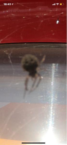 この蜘蛛は毒蜘蛛ですか?