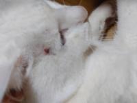 猫のケガについて教えて下さい。 今、気がついたのですが猫の目の近くに 傷が、いつの間にかあって、このような時は 直ぐに病院で診察を受けた方がよいのでしょうか。教えて下さい。