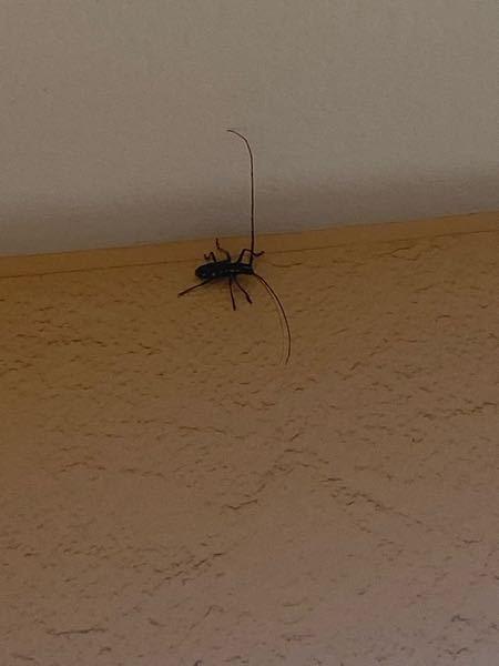この虫ってなんでしょうか??