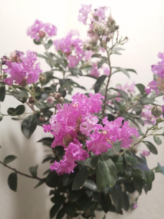 この花の名前わかりますか?