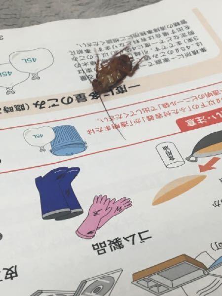 このゴキブリはなんと言う種類でしょうか?