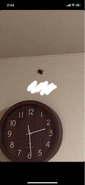 これなんの虫ですか? ずっと飛び回ってます><