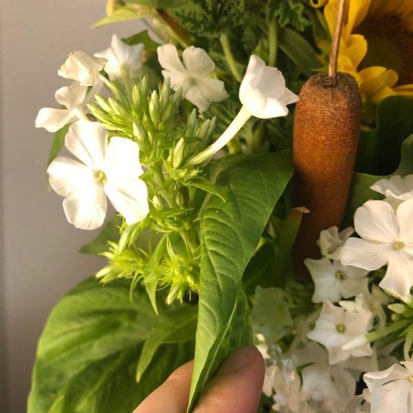 花の名前を教えて下さい。 写真にある、 白のお花、また茶色の面白い形のお花です。