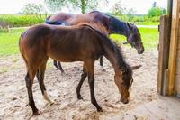 歴史見ると、私達のご先祖さま達は馬乗るの、上手かった気がします。  私達も練習すれば馬乗るの、上手くなるのでしょうか?  もしかしたら? ご先祖さま達の遺伝子を受け継いでいるなら馬乗りの才能はあるとか?  単に運動神経な可能性もありますが。