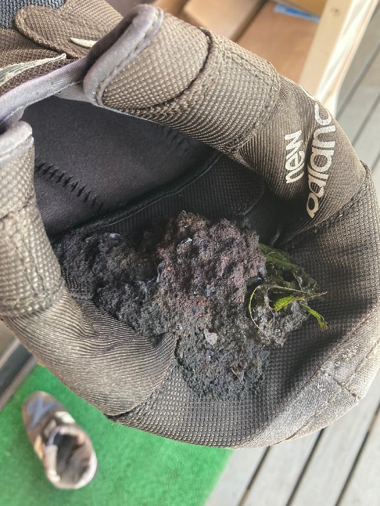 今朝2階のベランダに出た際に、靴の中に動物の糞の様なものがありました。 草が混ざっている様なんですが、何の糞なのか分かりません。どなたかわかる方教えてください。 因みに住まいは茨城県の牛久市内です。