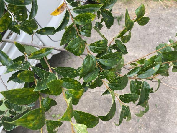 これは何の木ですか? どなたかよろしくお願いします。