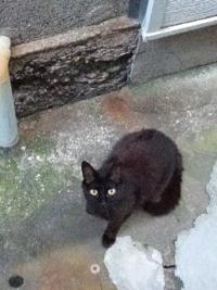 野良猫を手懐けて家に入れるのは無理ですかね?野良なので人を見ると逃げます。 まあ結構なれてきててある程度の距離があればにげないんですけど。野良猫だらけなんですよねうちの周り。最近子猫もいてるようですが、めちゃくちゃこいつは警戒心強くて顔見たらすばやく逃げていきます。この黒はもう大人と思うのですが結構こっちをいつも見てますが逃げはしません距離をとってたらリラックスして寝たりしてます。でもさわる...