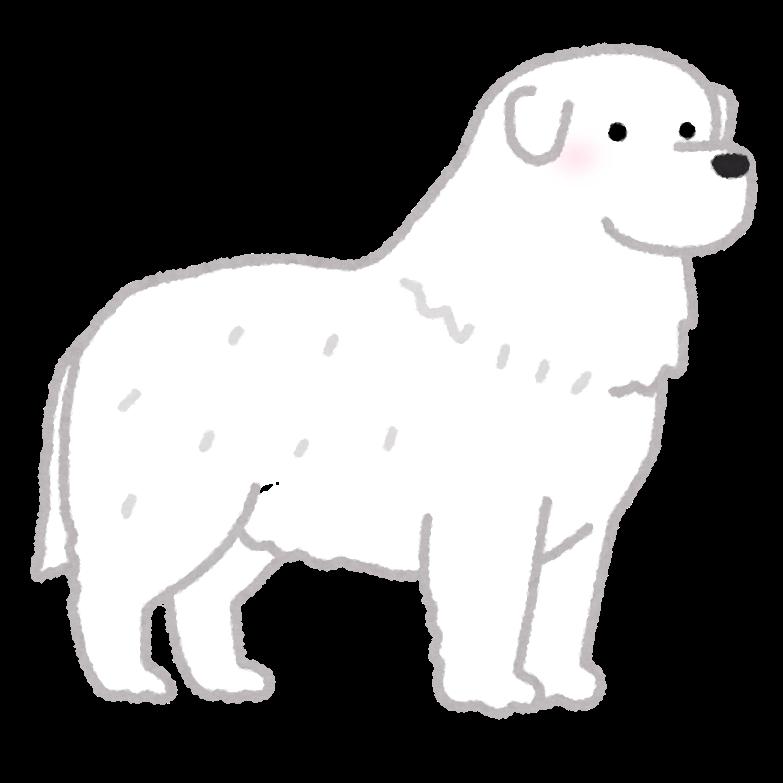 大型犬って飼うとなったら色々と大変だと思いますがちょっと憧れますよね! みなさんはどの大型犬を飼ってみたいと思いますか? https://kids.yahoo.co.jp/zukan/pet/dog/large/