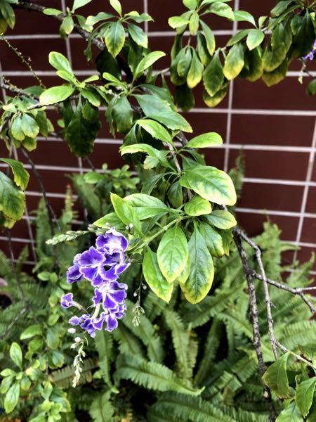 この花の名前を教えてください! 小さめの花がいっぱい咲いてて綺麗で気になりました よろしくお願いいたします。