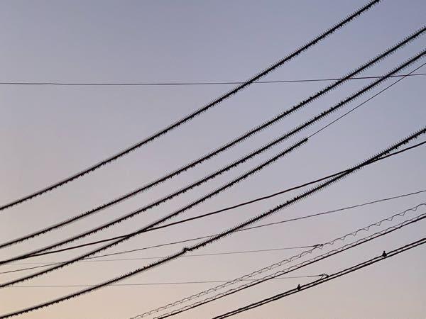 電柱のここの電線?、なぜこんなに ギザギザしているのですか? 名前はありますか? 鳥が止まらないようにしているのかな と思いましたがなぜこの部分だけギザギザ させているのか気になります あと、その下(奥)の半円?の電線も なんでこんなにくるくるしているのか 教えてください