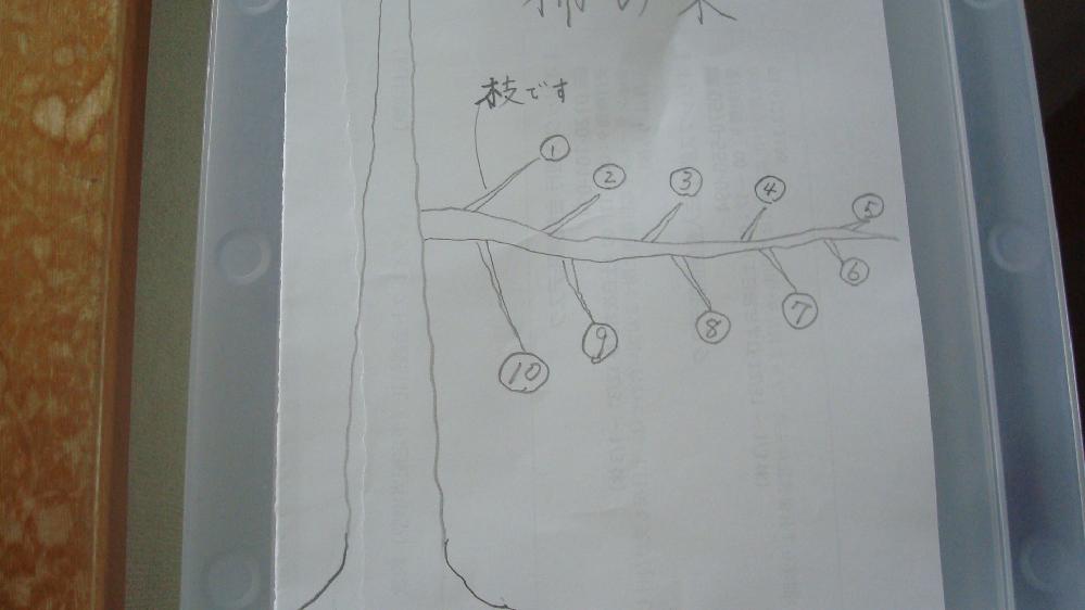 柿の木についての質問ですが、成長したこの枝には実が1個もならず、来年花芽をつけさせるためにはどのように選定したらよいですか番号で教えてください?