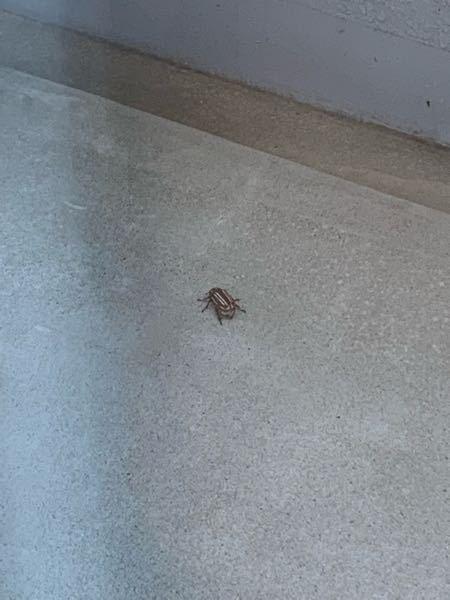 至急!!! お願い致します。 洗濯物を干そうと思ったらベランダにこんな虫がいました。動かないのですが気持ち悪いです。 何か有害な虫ですか? 写真分かりにくくてすみません。