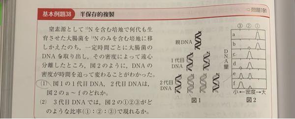高校生物 遺伝半保存的複製 この問題の解説をお願いします 「密度」と問題文や図2にありますが、DNAの密度とはどういうことなのか理解できません また、図1の線が黒と白の色で分けられているのは...