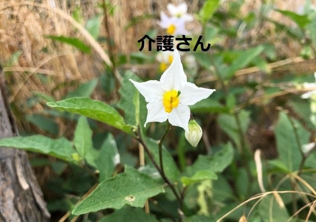 この花の名前は何ですか? 撮影日は2021年7月3日で撮影場所は兵庫県です。 よろしくお願いします。
