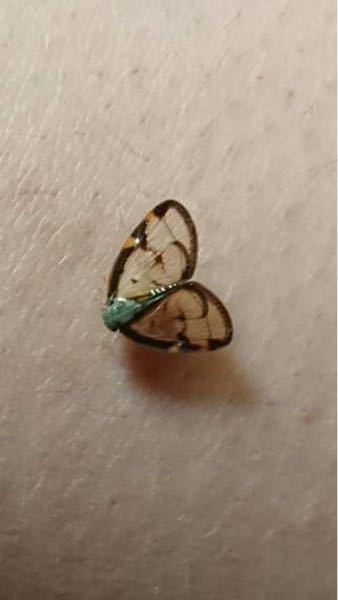 この虫は何て言う虫ですか?