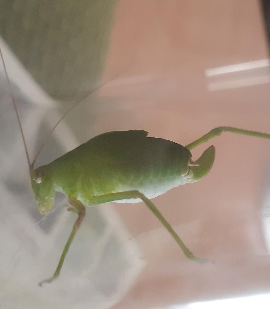 この虫はなんと言う種類ですか? 子どもに聞かれたのですが、自宅にある図鑑では分からなくて答えられませんでした。 教えていただけると助かります。